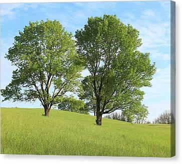 Summer Trees 4 Canvas Print