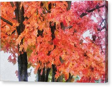 Trees Aflame Canvas Print by Jeff Kolker