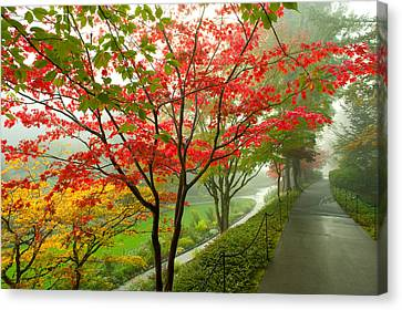 Garden Scene Canvas Print - Trees Along A Garden Path, Victoria by Panoramic Images