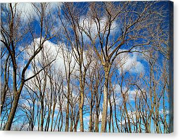 Canvas Print featuring the photograph Trees And Clouds by Valentino Visentini