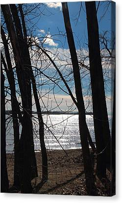 Canvas Print featuring the photograph Trees And Lake Reflections by Valentino Visentini