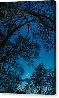 Trees And Moon Canvas Print by Darren White