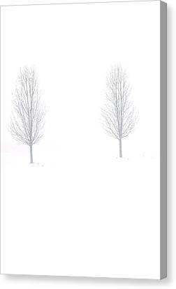 Trees And Snow Canvas Print by Daniel Thompson
