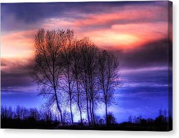 Trees And Twilight Canvas Print