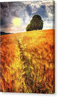 Canvas Print featuring the photograph Trees At The Top by Debra and Dave Vanderlaan