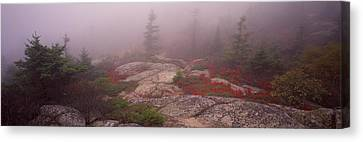 Trees Covered With Fog, Cadillac Canvas Print by Panoramic Images