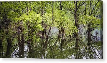 Trees Canvas Print by Debra and Dave Vanderlaan
