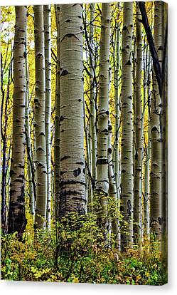 Trees For The Forest Canvas Print by Jennifer Grover
