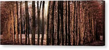 Trees Gathering Canvas Print by Wim Lanclus