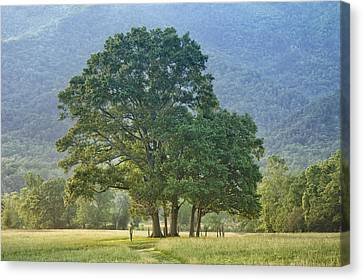 Trees - Great Smoky Mountains - Meadow Canvas Print