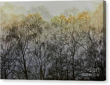 Trees Illuminated By Faint Sunshine, Double Exposed Image Canvas Print