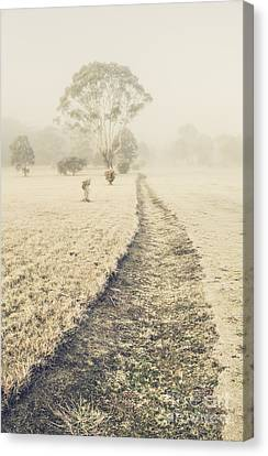 Trees In Fog And Mist Canvas Print by Jorgo Photography - Wall Art Gallery