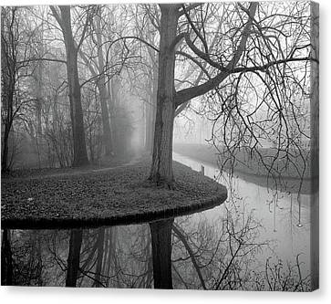 Trees In Fog Canvas Print by Copyright Victor Schiferli