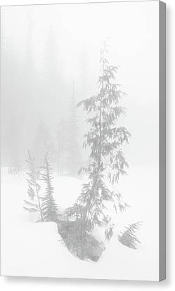 Canvas Print featuring the photograph Trees In Fog Monochrome by Tim Newton