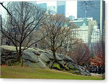 Canvas Print featuring the photograph Trees In Rock by Sandy Moulder