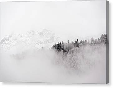Trees In The Clouds Canvas Print by Nicola Simeoni