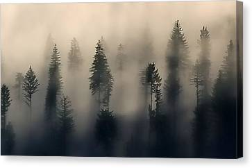 Trees In The Fog Canvas Print by Jerry Sodorff
