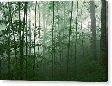 Canvas Print featuring the photograph Trees In The Mist by Joye Ardyn Durham