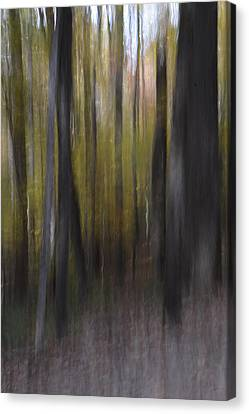 Trees In The Mist Canvas Print by Patricia Twardzik