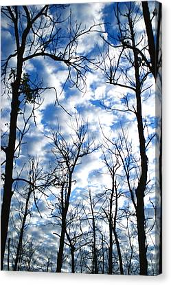 Canvas Print featuring the photograph Trees In The Sky by Shari Jardina