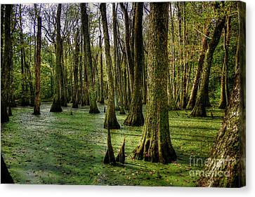 Trees In The Swamp Canvas Print by Larry Braun