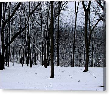 Trees In Winter Canvas Print by Dave Clark