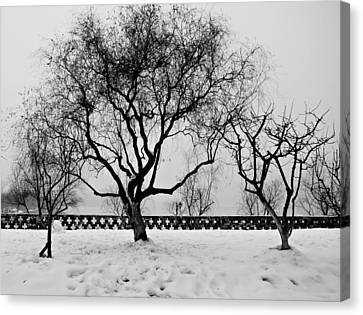 Trees In Winter Canvas Print by Dean Harte