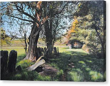 Trees Near Rhug. Canvas Print by Harry Robertson