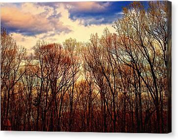 Trees No.3 Canvas Print by Michael Putnam