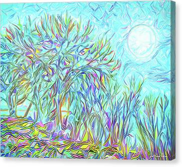 Trees Of The Indigo Moon - Boulder County Colorado Canvas Print by Joel Bruce Wallach
