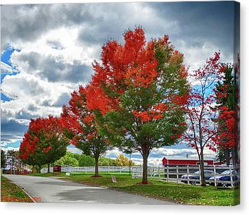 Trees On Fire Canvas Print by Bill Dussault