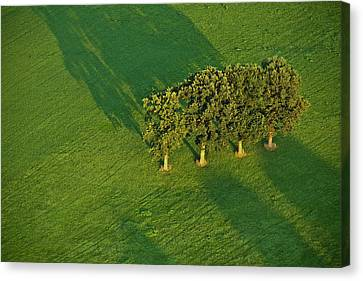 Trees On Green Canvas Print by Heiko Koehrer-Wagner
