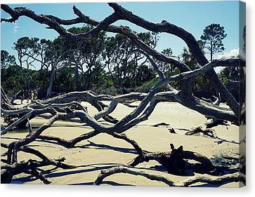 Trees On Jekyll Island Canvas Print by Laurie Perry