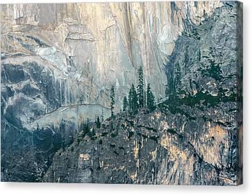 Trees On Ledge Canvas Print
