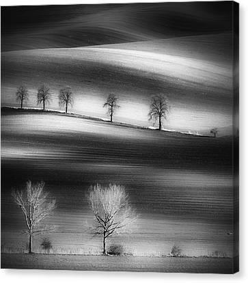 Trees Canvas Print by Piotr Krol (bax)