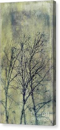 Bough Canvas Print - Trees by Priska Wettstein