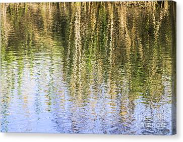 Trees Reflect In Water  Canvas Print by Vladi Alon