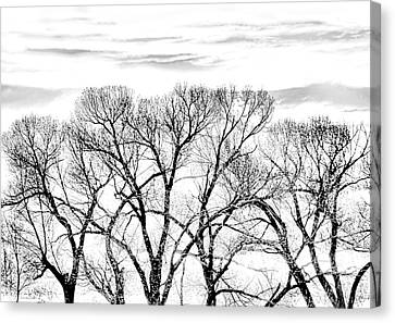 Canvas Print featuring the photograph Trees Silhouette Black And White by Jennie Marie Schell