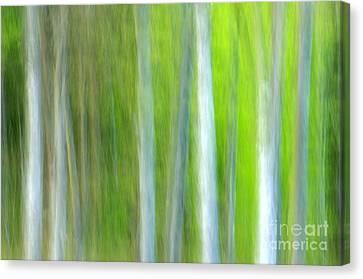 Trees Canvas Print by Silke Magino