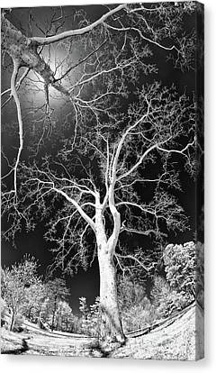 Canvas Print featuring the photograph Trees Sky And Sun by Dan Carmichael