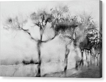 Trees Through The Window Canvas Print by Celso Bressan