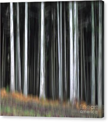 Trees Trunks Canvas Print by Bernard Jaubert