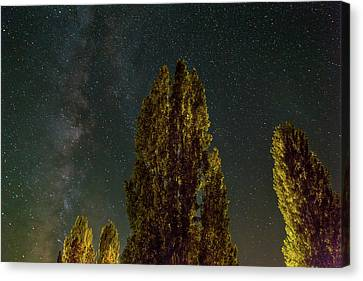 Canvas Print - Trees Under The Milky Way On A Starry Night by David Gn