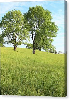 Summer Trees 2 Canvas Print