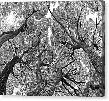 Canvas Print featuring the photograph Trees by Vladimir Kholostykh