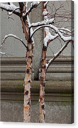 Trees Wall And Snow Canvas Print by Robert Ullmann