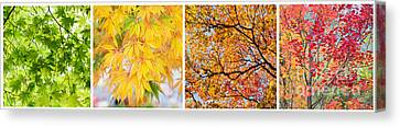 Fiery Red Canvas Print - Treetastic by Tim Gainey