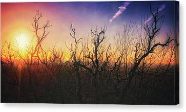 Canvas Print featuring the photograph Treetop Silhouette - Sunset At Lapham Peak #1 by Jennifer Rondinelli Reilly - Fine Art Photography