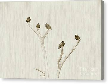 Treetop Starlings Canvas Print by Benanne Stiens