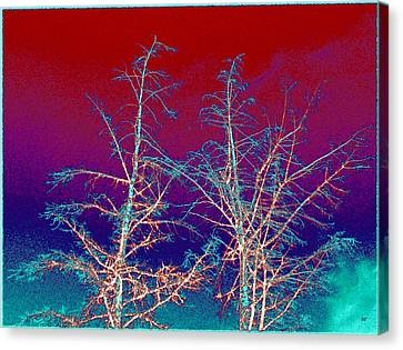 Treetops 4 Canvas Print by Will Borden